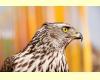 Птица с гос. флага
